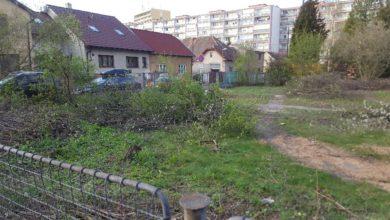 Photo of Kácení stromů na zahradě v ulici V Olšinkách vyvolalo přestřelku mezi zastupiteli a úřadem