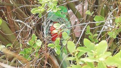 Photo of U třech věžáků na Kojetické už od úterý poletuje australský papoušek zpěvavý