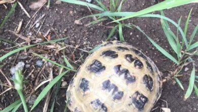 Photo of Hledá se majitel želvy. Našla se v Libiši.